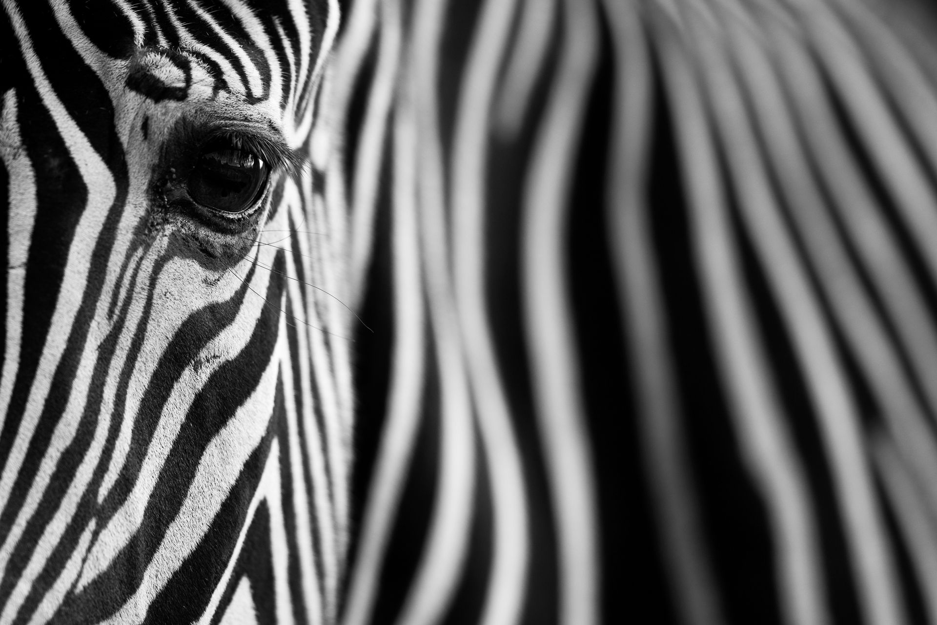 Eye & Stripes