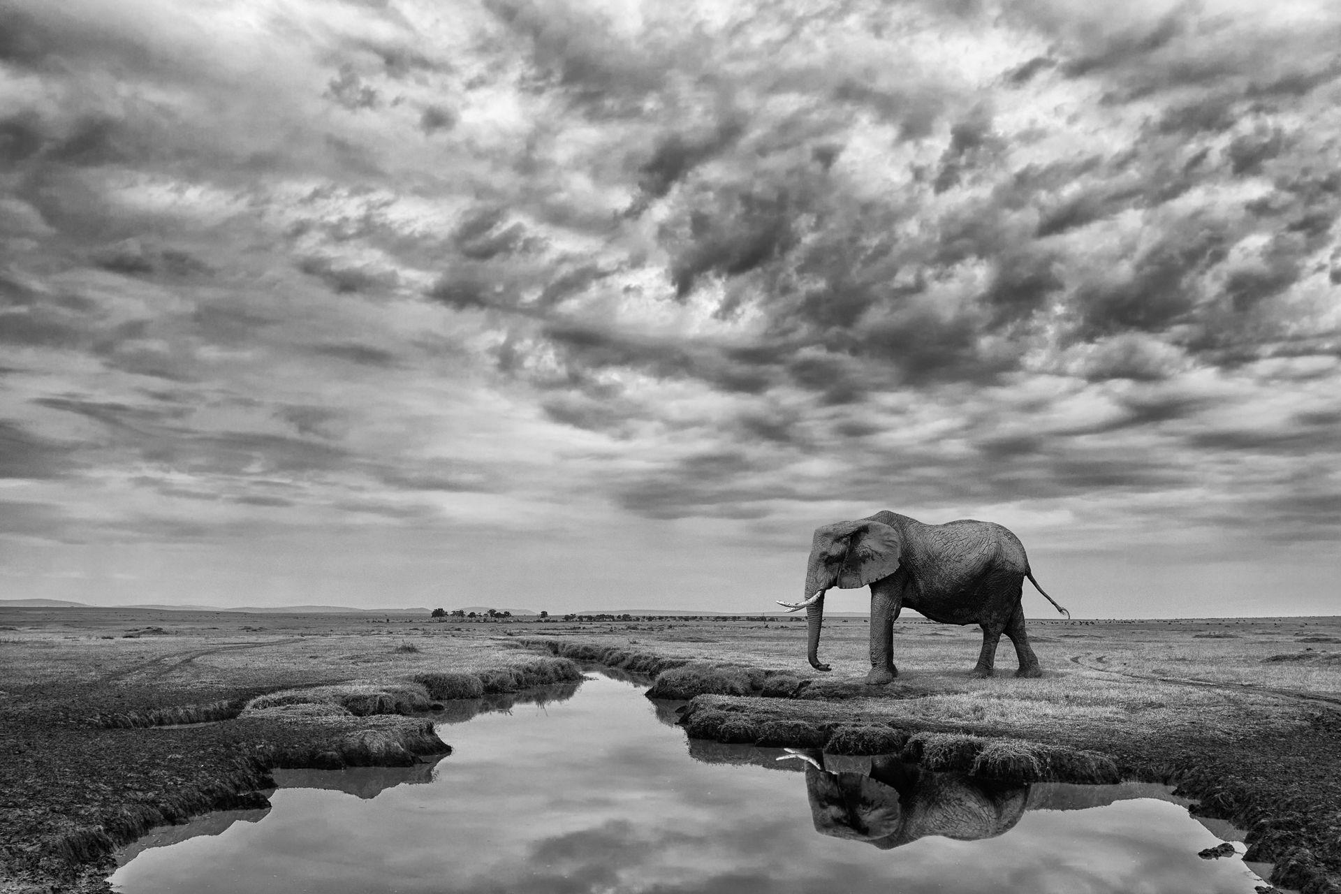 Giant Serenity