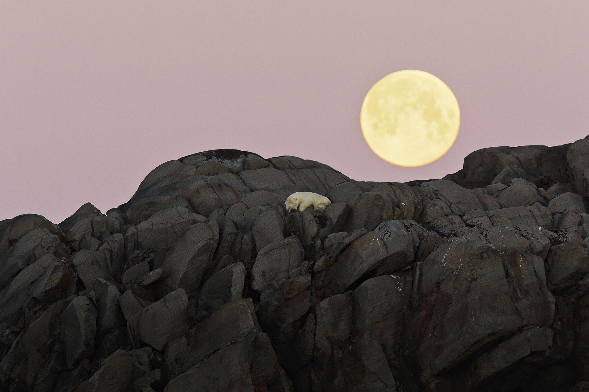 L'orso e la luna