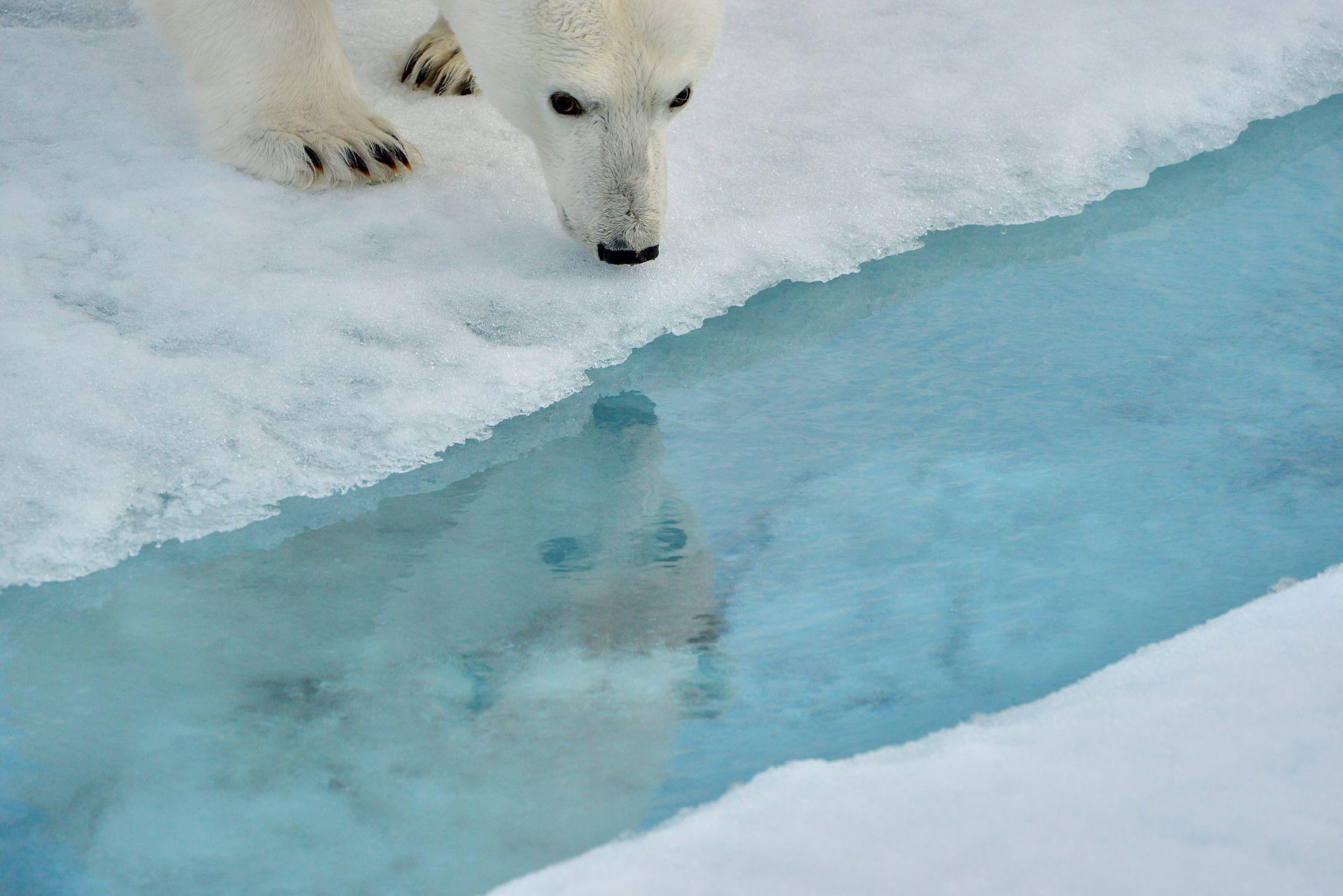 Polar mirror