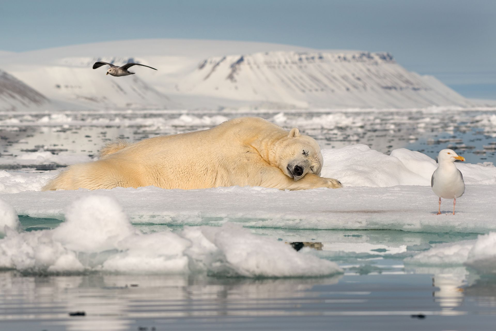 Dreaming on Sea Ice