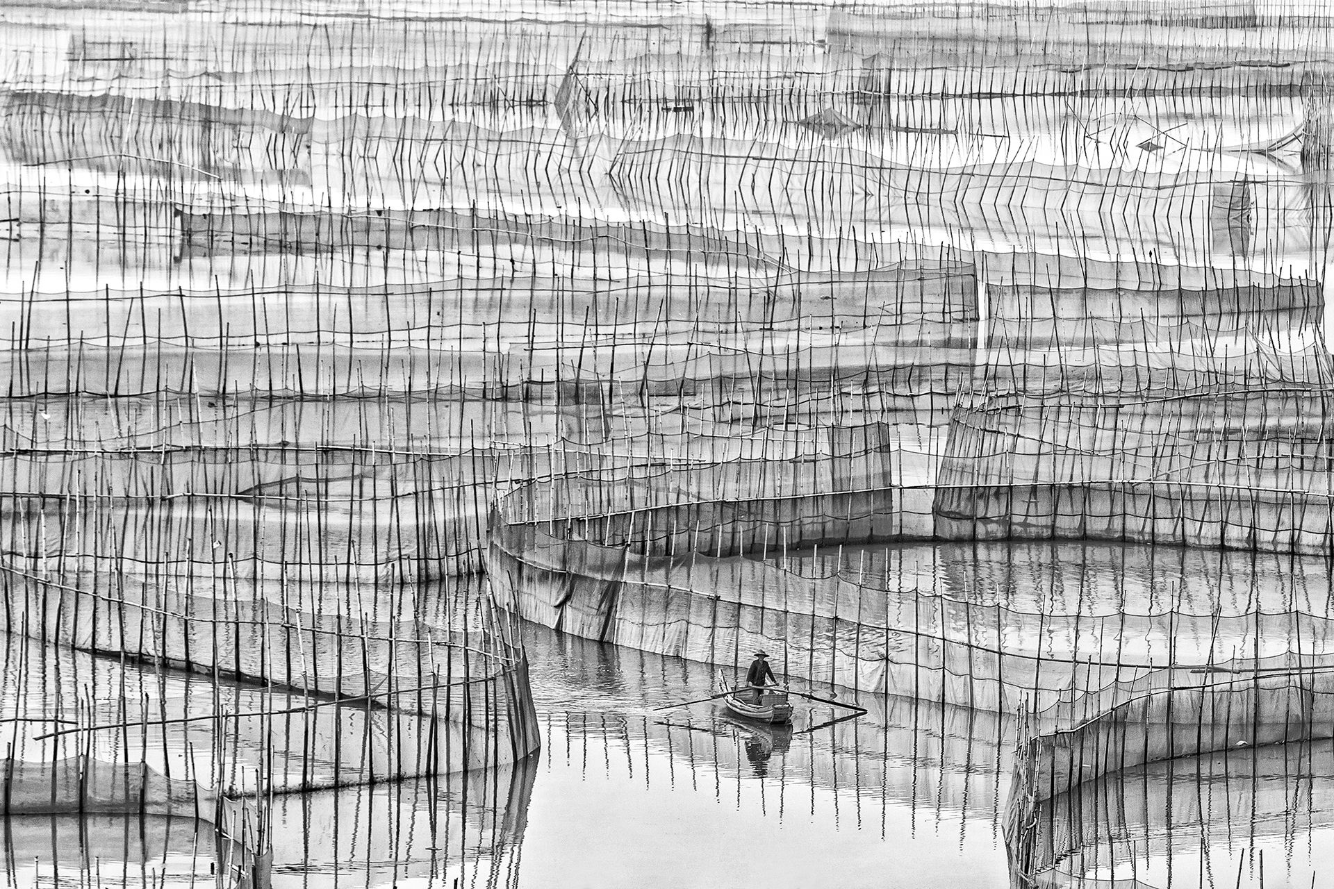 Nets Of Life
