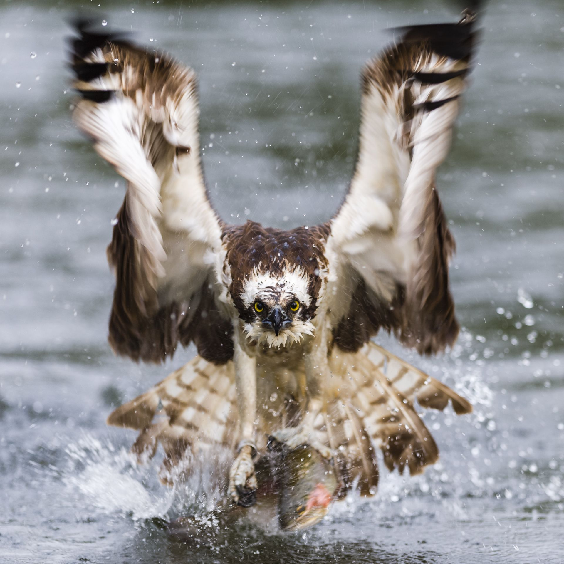 Osprey power
