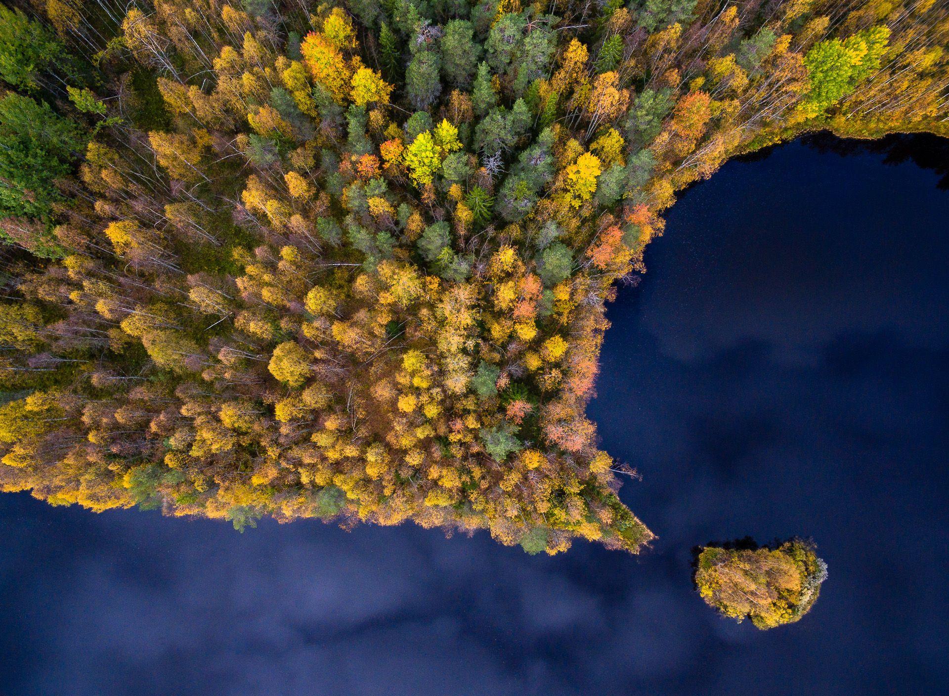 Autumn Dot