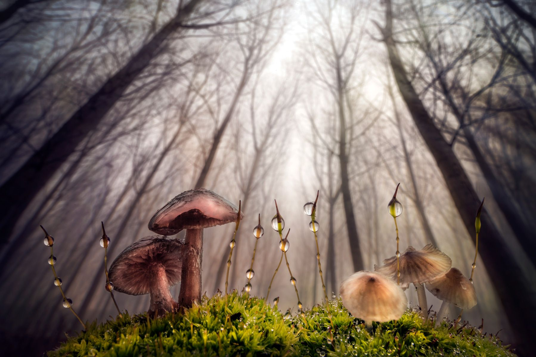 Small and giant creatures of the forest