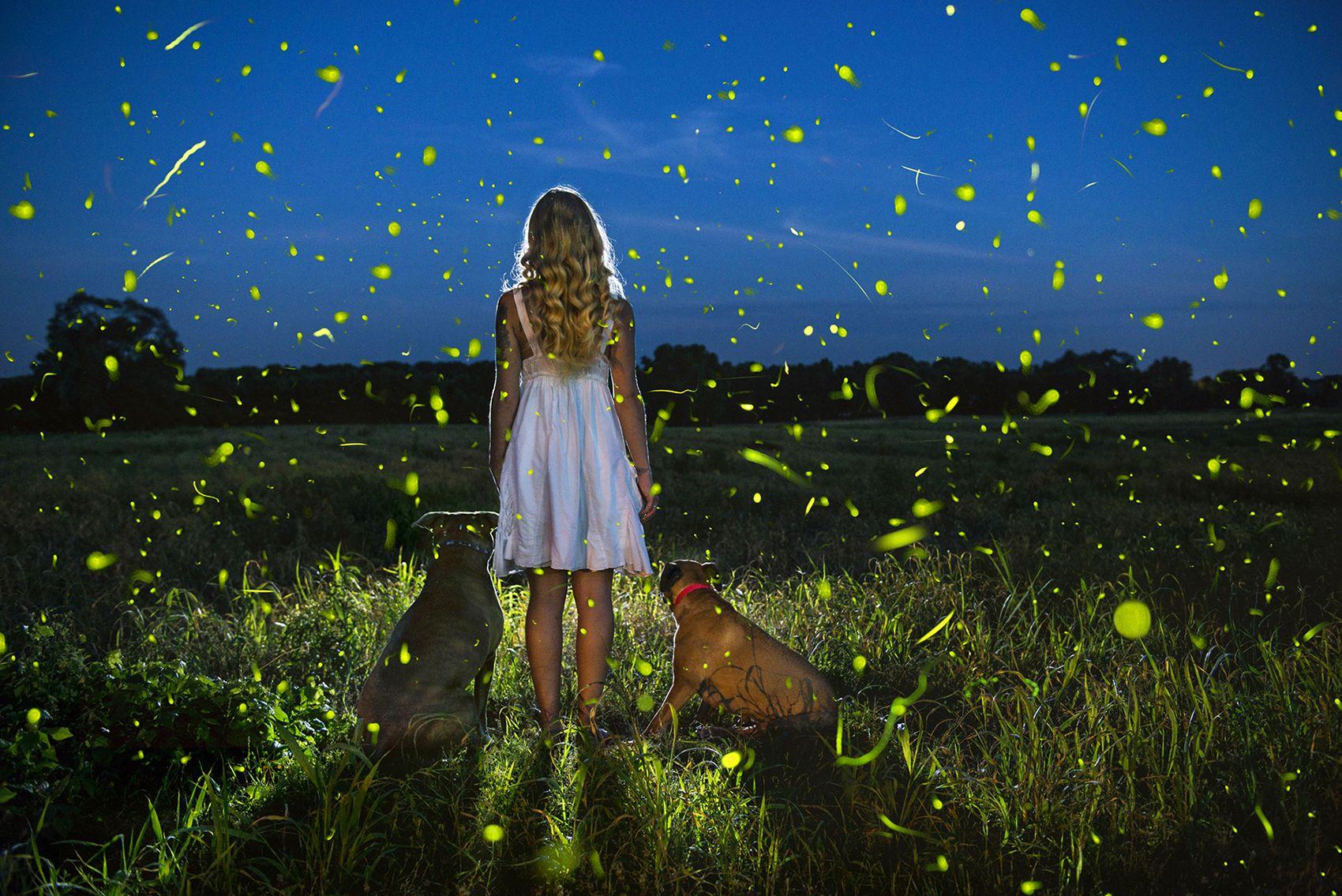 In Awe of Fireflies