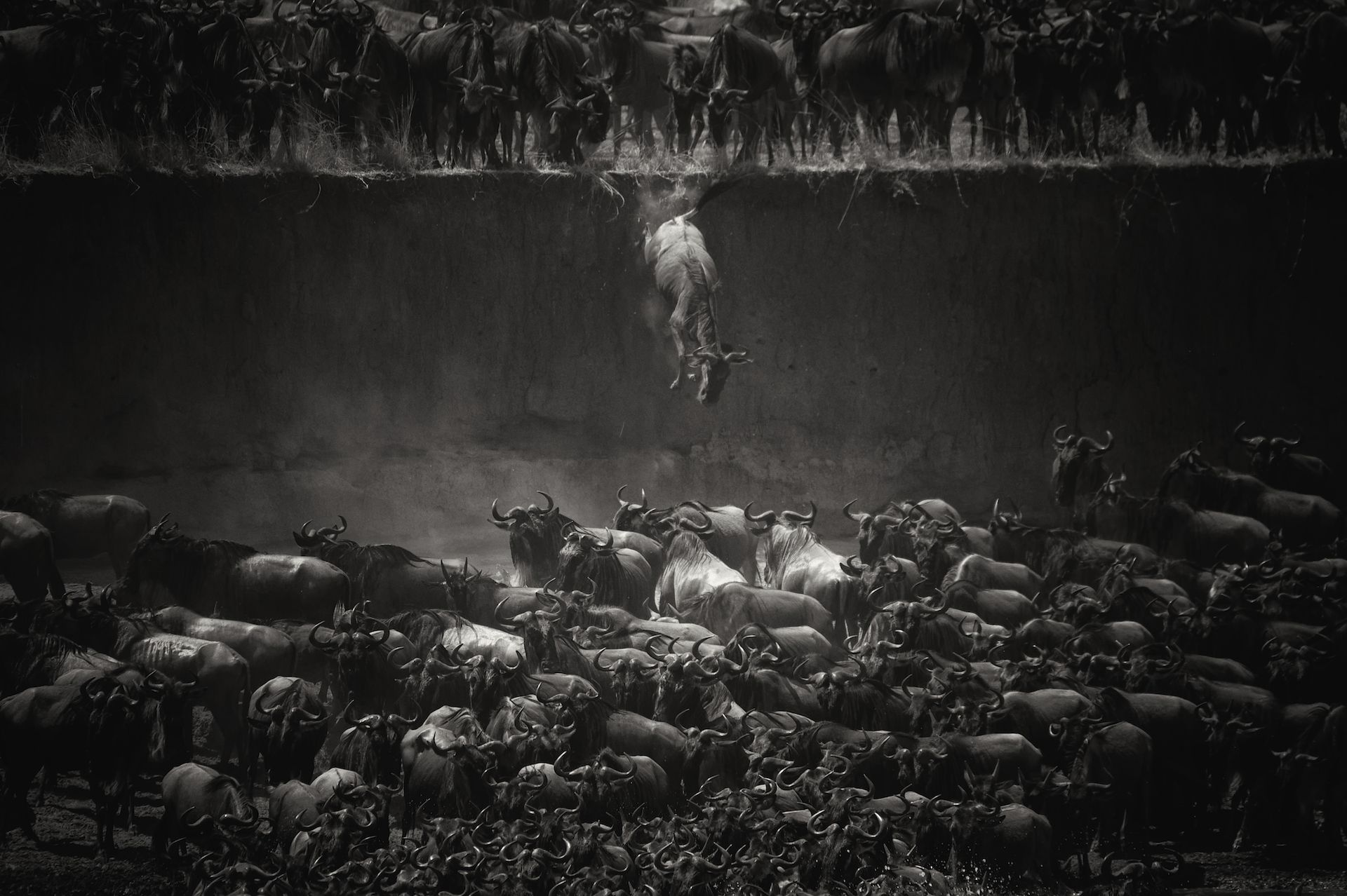 Leap of Faith (Jump of the wildebeest)
