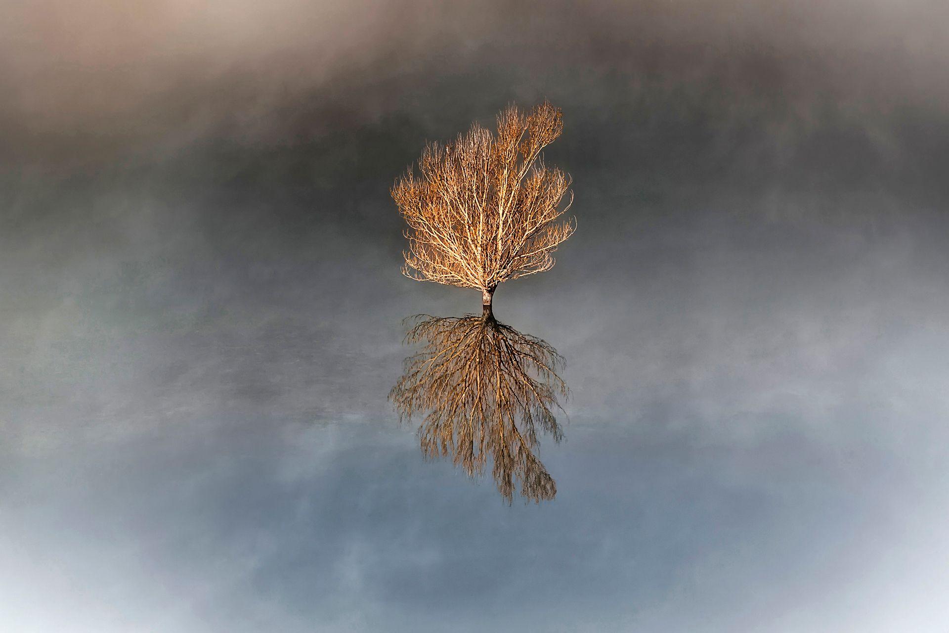 TREE FLOATING