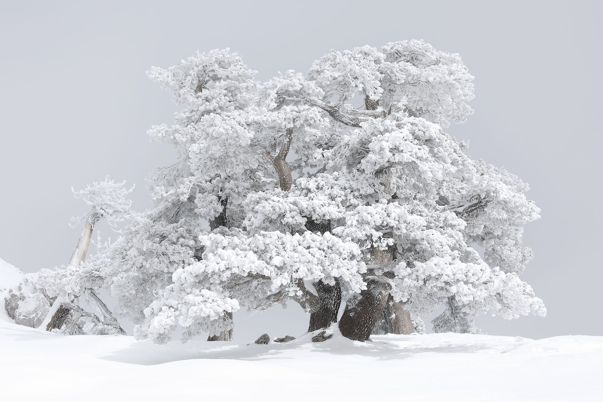 Inverno nel Giardino degli Dei