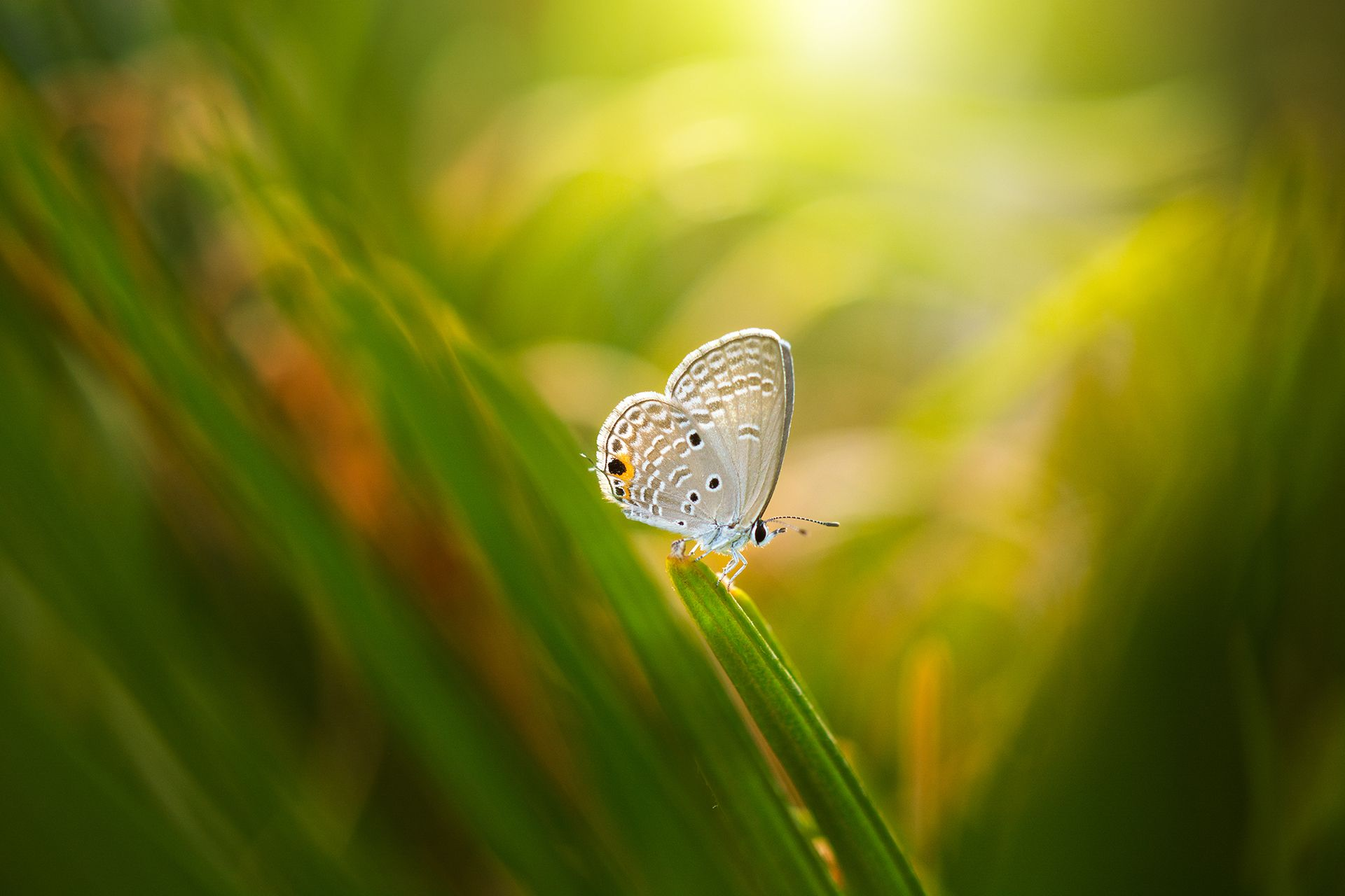 Morning Butterfly