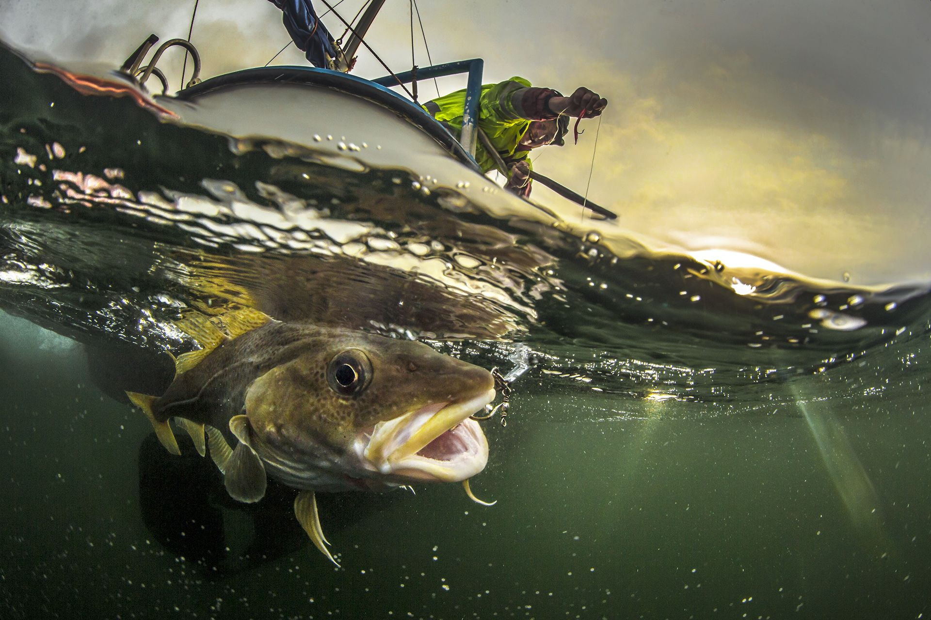 Traditional Coastal Cod Fishery