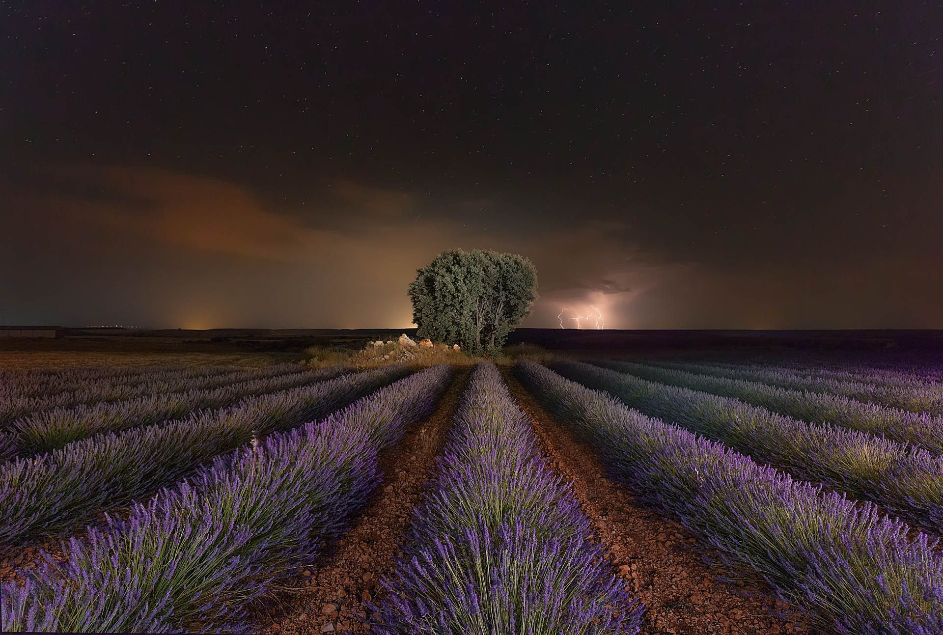 Lavender and Rays