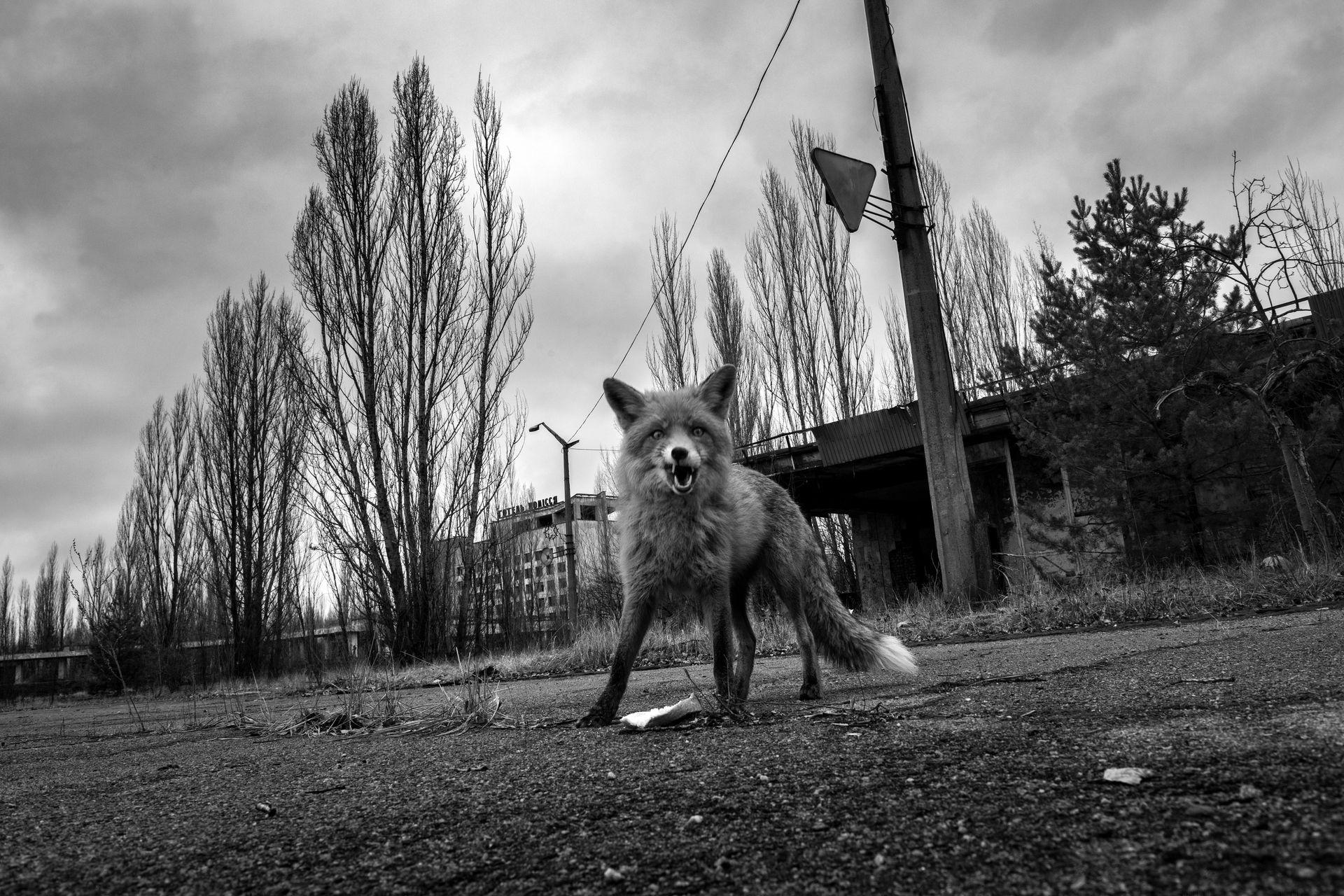 Chernobyl 30 anni dopo - 4