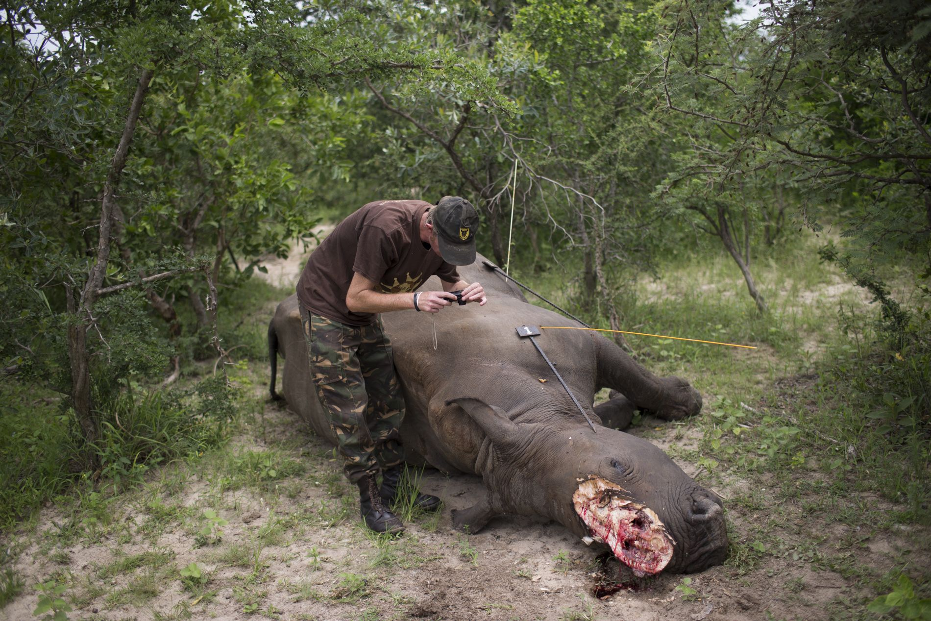 South Africa's Rhino War - 2