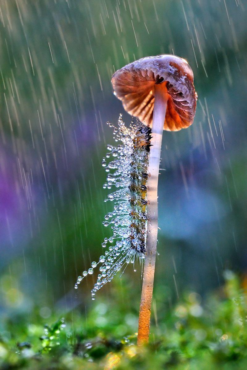 Sotto l ombrello