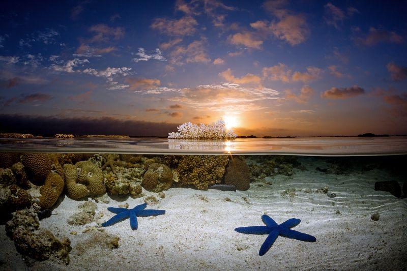 Sunrise Stars