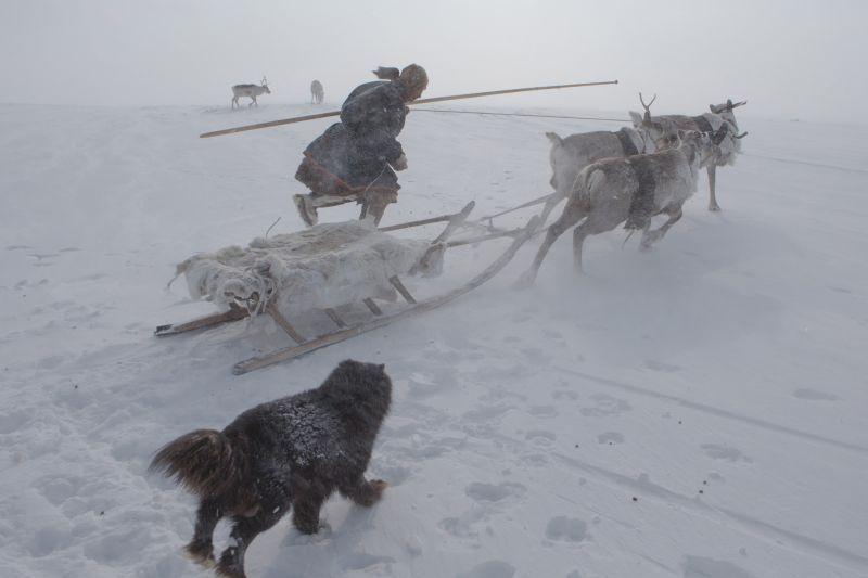 In the gydansky tundra