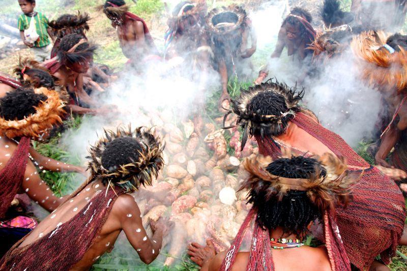 The dani women cook sweet potatoes