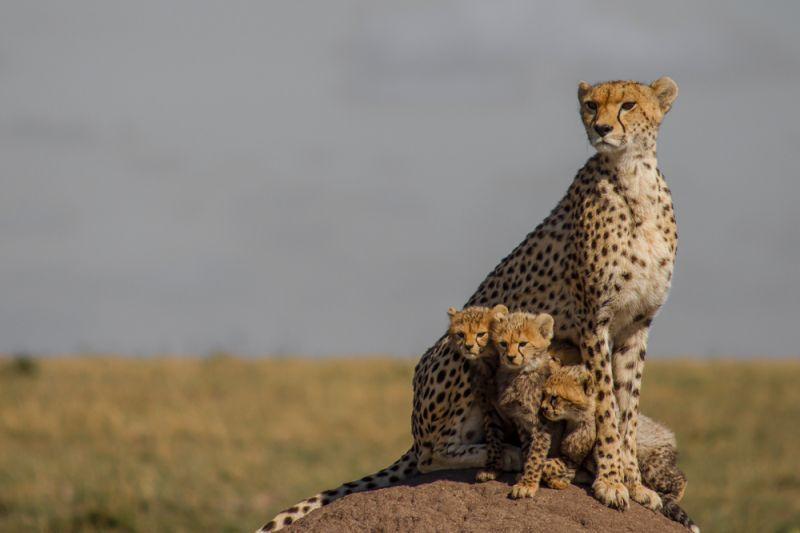 La famiglia della savana